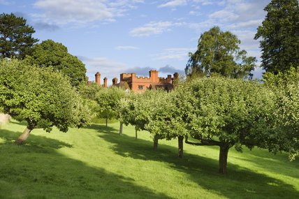 Trees in the Orchard at Wightwick Manor, Wolverhampton, West Midlands