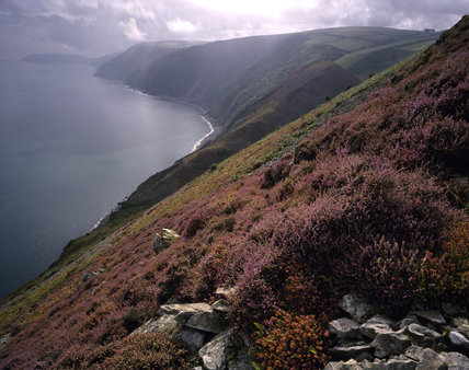 A view of Countisbury Cove from the foreland showing an abundance of heather in the foreground and grassy cliff edges