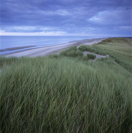 A view of the foreshore at Formby Point looking along the Marram and Sea-Lyme covered dunes, at low tide