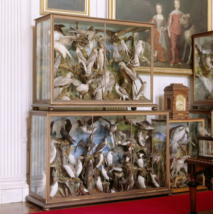 View of the bird display cases in the Saloon at Calke Abbey