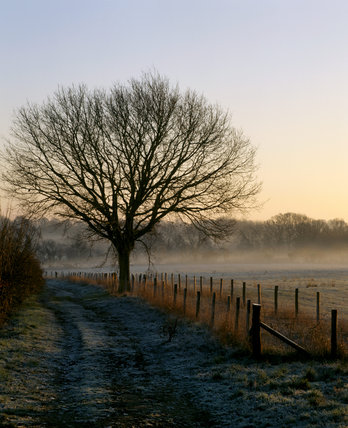 A bare tree silhouetted against the frosty background at Sissinghurst Castle Garden