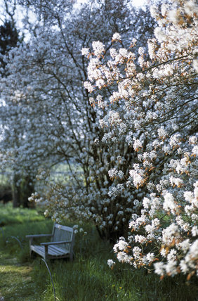 Blossom in the Wild Garden at Bateman's, East Sussex, framing a garden bench