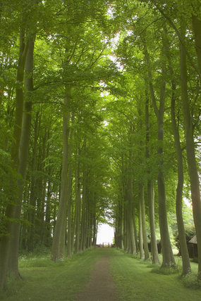 The Beech Avenue at Hidcote Manor Garden, Gloucestershire, looking towards the wrought iron gate in the far distance