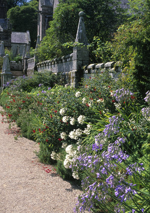 A mixed border with agapanthus, leading to the C15th granite church at Lanhydrock, Cornwall