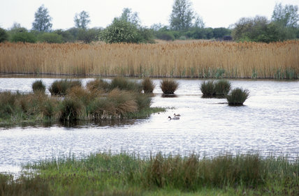 View of waterfowl across the mere from the hide at Wicken Fen, Cambridgeshire