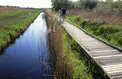 Boardwalk near the wind pump at Wicken Fen, Cambridgeshire