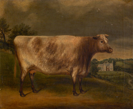 Waterwitch': Prize Cow, Winner of the 1st Prize, Totnes