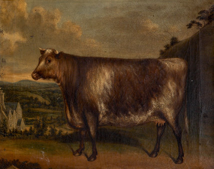 'Lunette': Prize Cow,Winner of the 1st Prize at Modbury