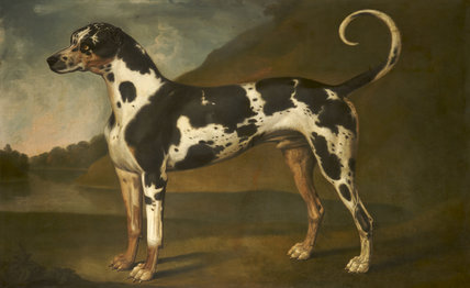 A Great Dane, called 'Turpin'