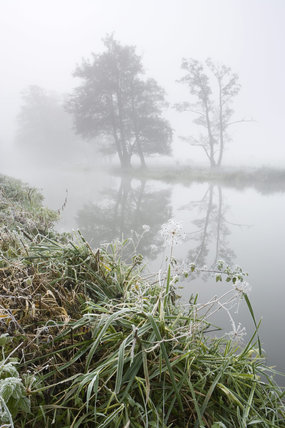 The River Wey Navigations near Triggs Lock at Send, Surrey on a misty, wintry morning showing the river with trees on the far bank