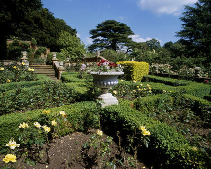 View across Granny's Rose Garden at Farnborough Hall with box parterre hedging and golden yew topiary