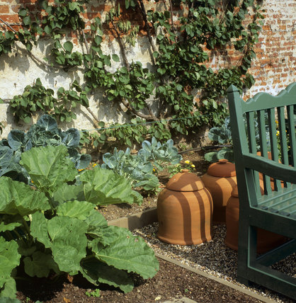 Detail fo the edge of a bench and a bed with rhubarb and cabbages in the Kitchen Garden, Greys Court