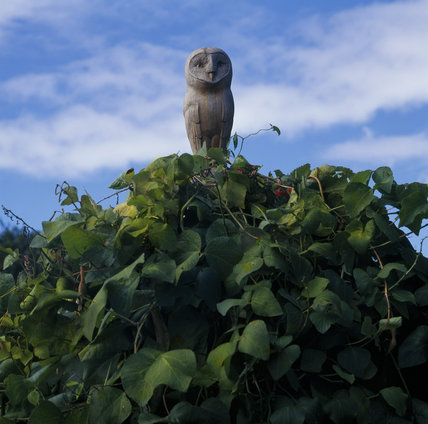 View of a carved owl, one of four, in the Kitchen Garden, Greys Court