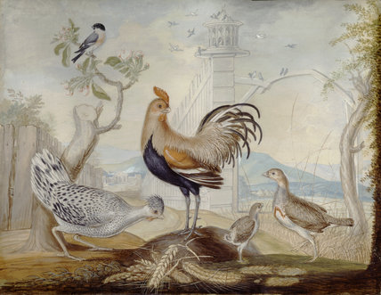 An 18th Century painting of a variety of birds