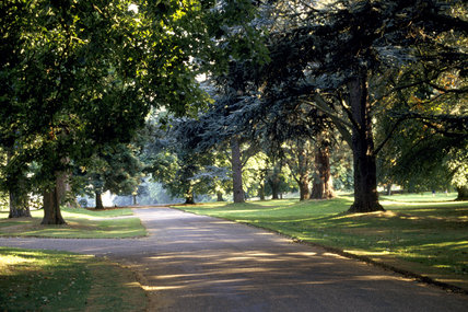 Trees along the main avenue to the house at Ascott