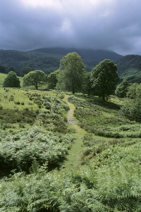 The path leading to Yew Tree Farm, Coniston, in the Lake District