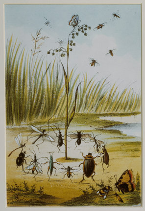 Framed colour print in the Mary Ward room of dancing insects by the side of a pond
