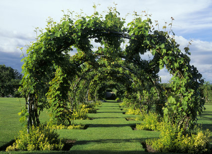 View of the vine pergola in the formal garden at Powis Castle