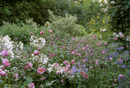 Part of the garden at Peckover House showing a wide variety of striking colourful flowering plants and shrubs in full bloom