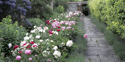 The Peony Walk in the garden at Greys Court which has an almost mystical atmosphere being tucked into the Chiltern downland and hills with the gabled Elizabethan house and medieval towers