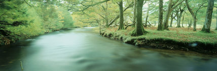 A river running through Lanthwaite Wood, near Buttermere in the Lake District