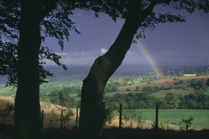 A rainbow springs from the sunlit fields against a dark sky, with the silhouette of two tree trunks in the foreground