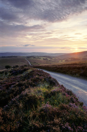 Road at sunset across moorland on Exmoor Down with purple heather by the roadside, Somerset