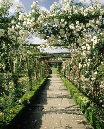 Looking along the Pergola in the Rose Garden at Polesden Lacey
