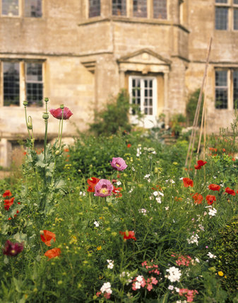 This is a detail of the gardens at Newark Park, Gloucestershire, with the house in the background
