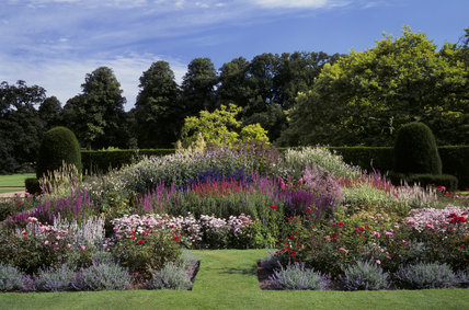 A succession of herbaceous beds rising to a clipped hedge and tall trees in the background at Blickling Hall