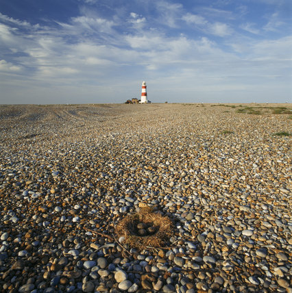 The Shingle beach of Orford Ness, with the lighthouse in the background