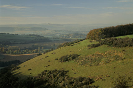 The chalk downland slopes of Cranborne Chase, Fontmell Down, Dorset, in the autumn sunlight with a view towards misty hills and fields in the background