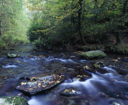 The River Lyd flowing through the woods at Lydford Gorge in Devon