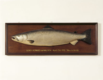 Close-up of fish caught by Lord Howard de Walden,