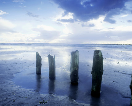 Decaying piles in the wet sands left by the retreating tide at East Head, West Wittering