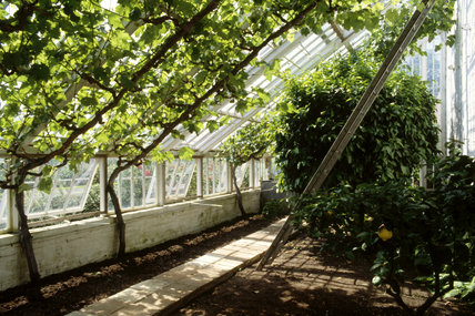The interior of the Greenhouse at Felbrigg Hall