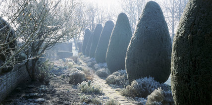 A horizontal shot of the Yew Walk at the Courts in February, showing frost on the plants and early morning mist