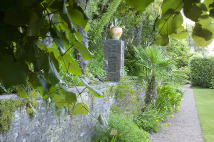 An Agave in an urn on the terrace wall at Overbecks Garden, Salcombe, Devon