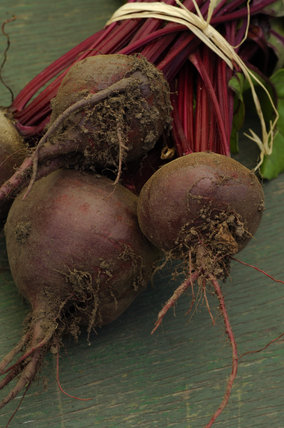 Fresh beetroot grown in the Walled Garden at Calke Abbey, Derbyshire, for sale in the garden shop