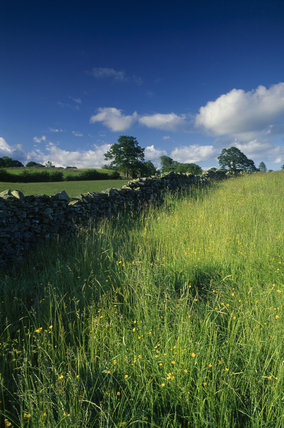Meadow near Hawkshead with wild flowers and a stone wall, in Cumbria