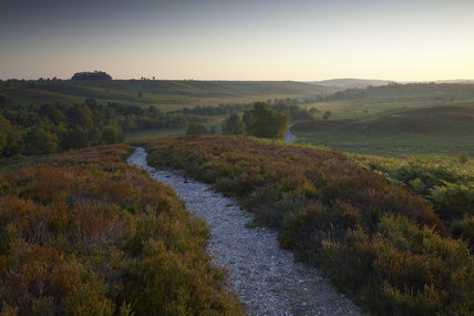 Sunrise over Rockford Common and Digden Bottom, looking north, New Forest, Hampshire