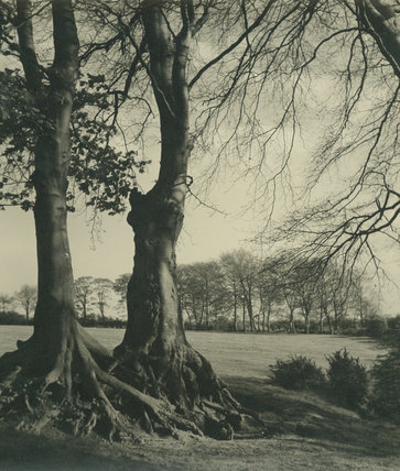 Copse Seen Through Trees