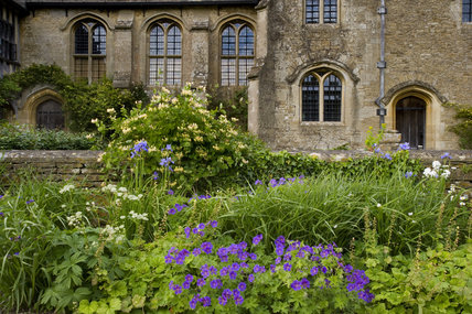 Hardy geraniums flowering in the garden with the South front of the fifteenth-century Great Chalfield Manor, Wiltshire, behind