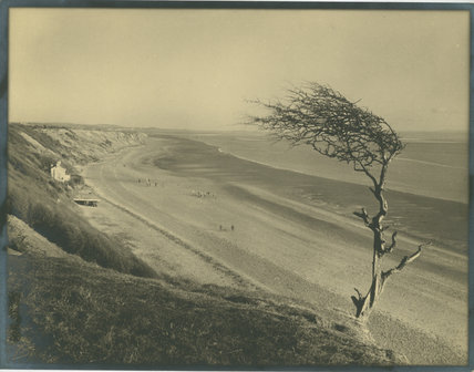 Unidentified Beach with Wind Damaged Tree
