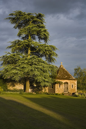 A magnificent cedar tree and the Apple House, one of the ourbuildings in the gardens at the fifteenth-century Great Chalfield Manor, Wiltshire
