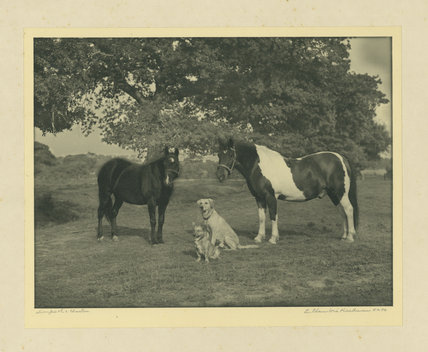 Mrs Mallinson's Horses and Dogs