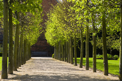 The Lime Tree Walk in the garden at Coughton Court, Warwickshire