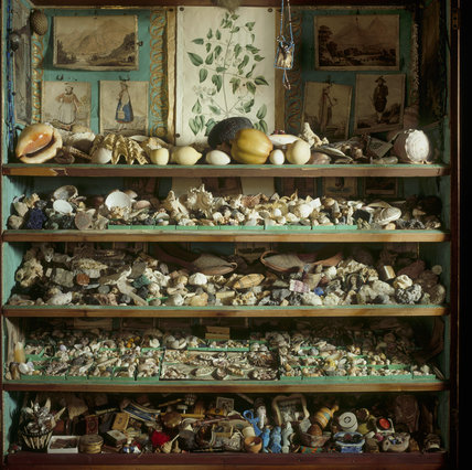 Collection of 18th-century curiosities including many shells in the mahogany secretaire bookcase from the Library