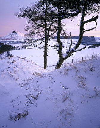 Roseberry Topping, covered in snow, catching the rosy dawn light, seen from Cliff Ridge Wood