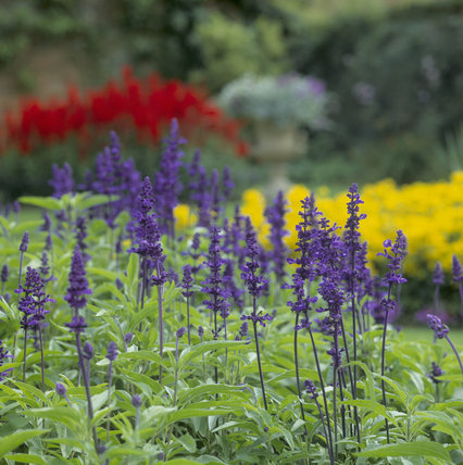 A close view of a colourful herbaceous border in the Walled Garden of Calke Abbey